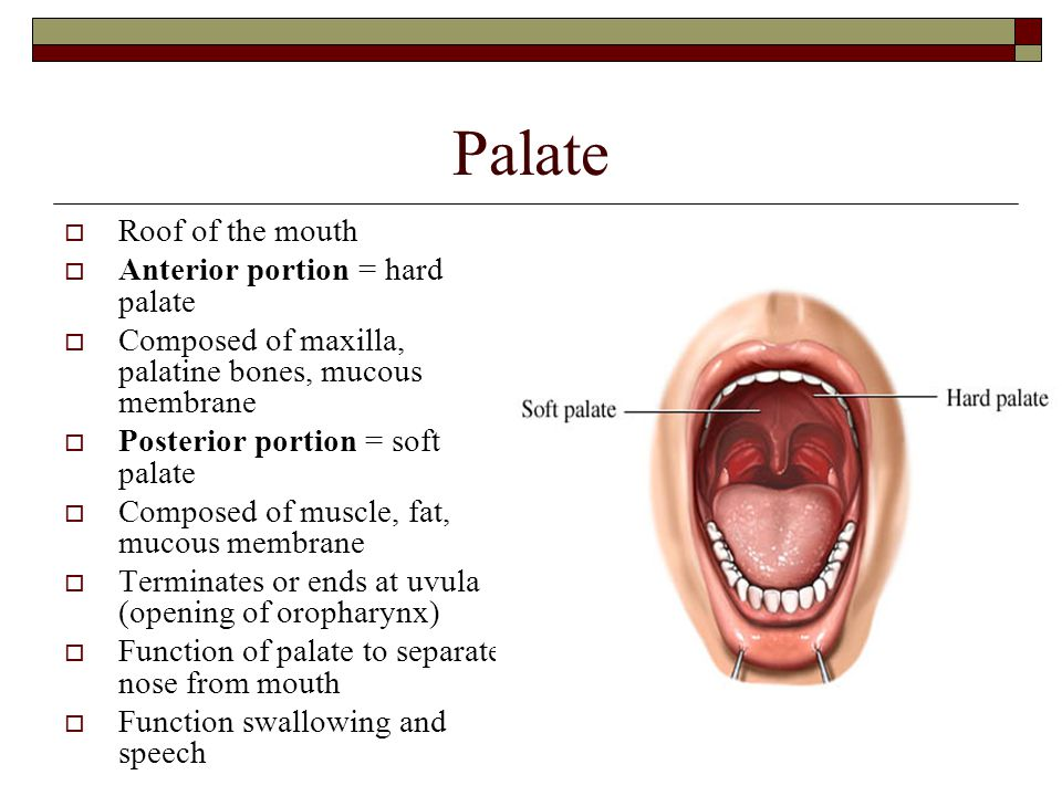 Palate Roof of the mouth Anterior portion = hard palate