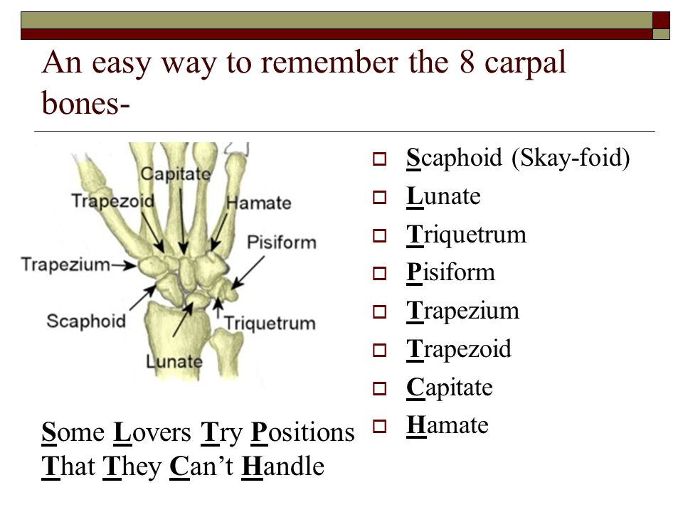 An easy way to remember the 8 carpal bones-