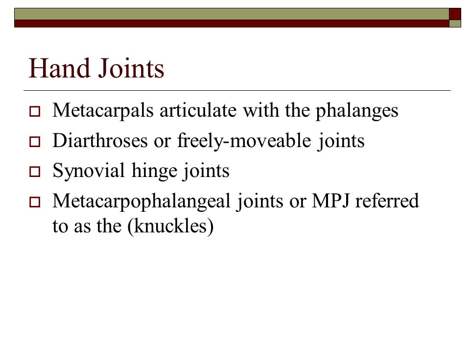 Hand Joints Metacarpals articulate with the phalanges