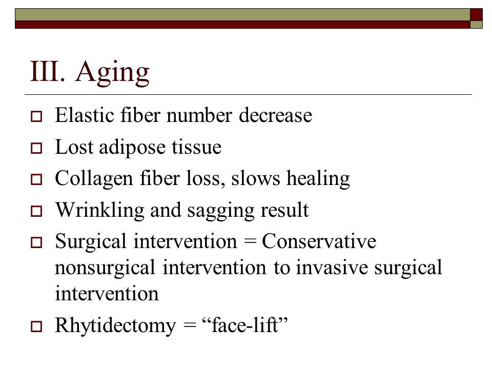 III. Aging Elastic fiber number decrease Lost adipose tissue