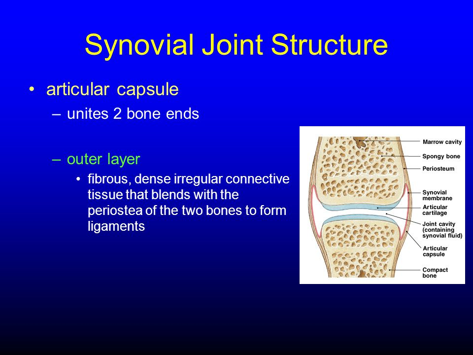 Synovial Joint Structure
