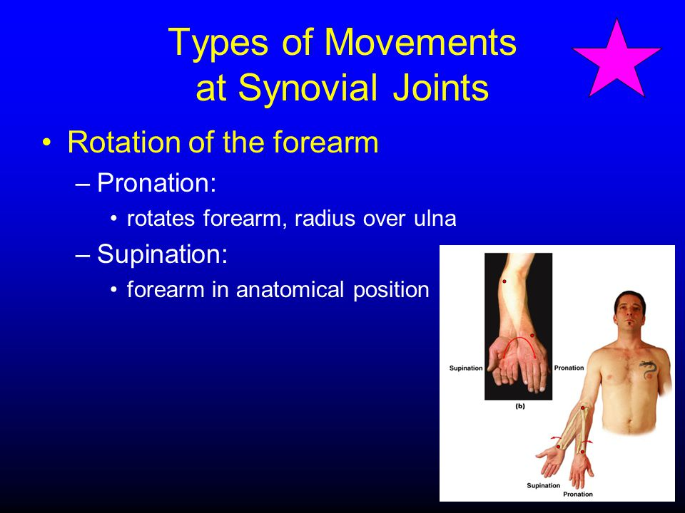 Types of Movements at Synovial Joints