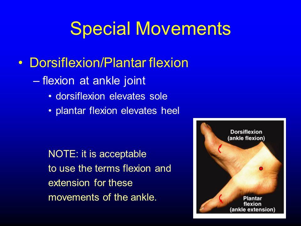 Special Movements Dorsiflexion/Plantar flexion flexion at ankle joint