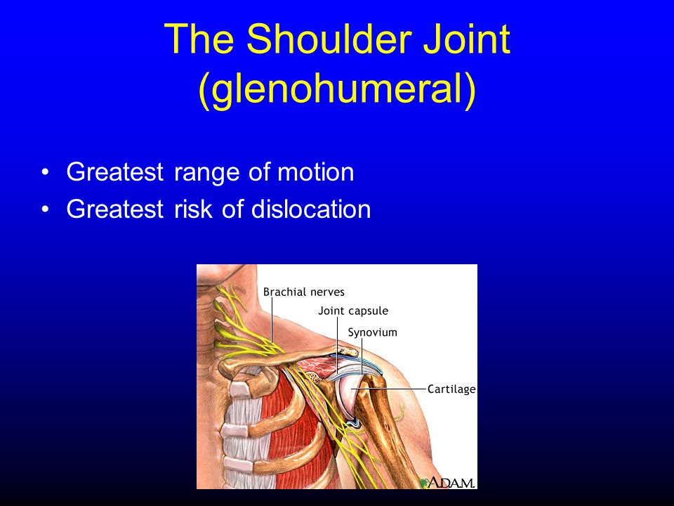 The Shoulder Joint (glenohumeral)