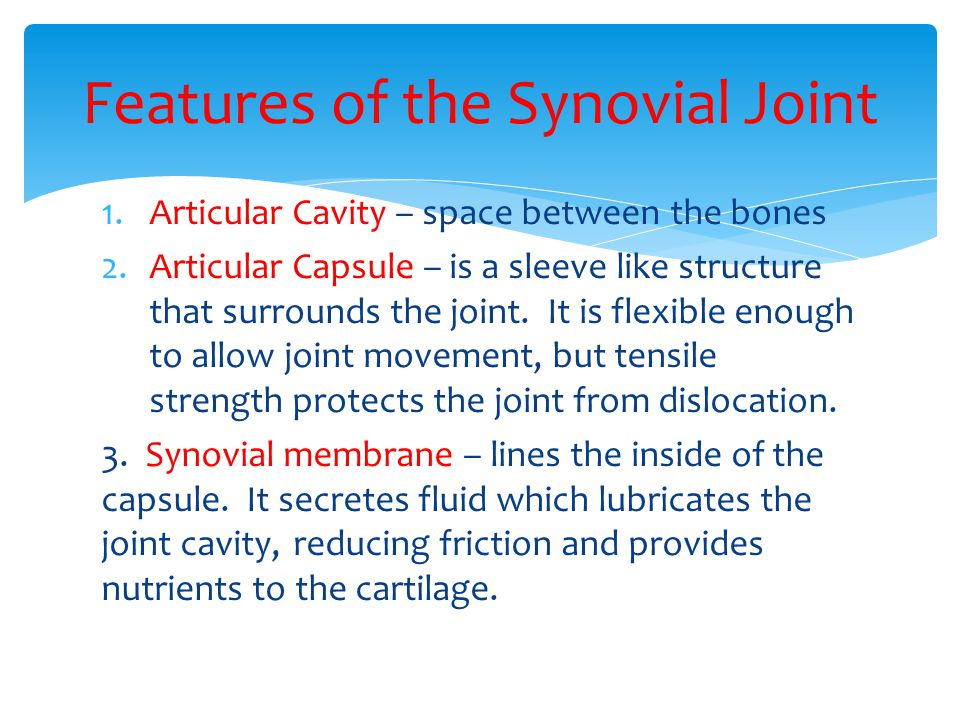 Features of the Synovial Joint