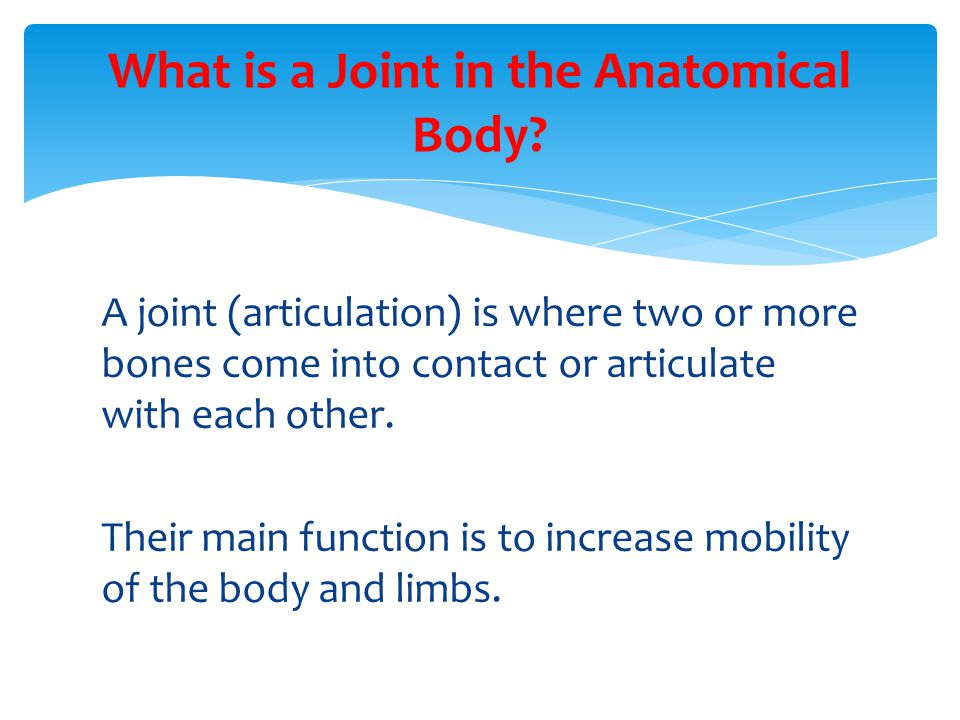 What is a Joint in the Anatomical Body