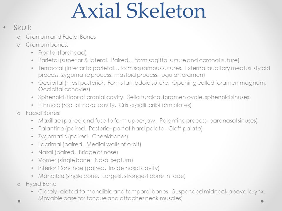 Axial Skeleton Skull: Cranium and Facial Bones Cranium bones: