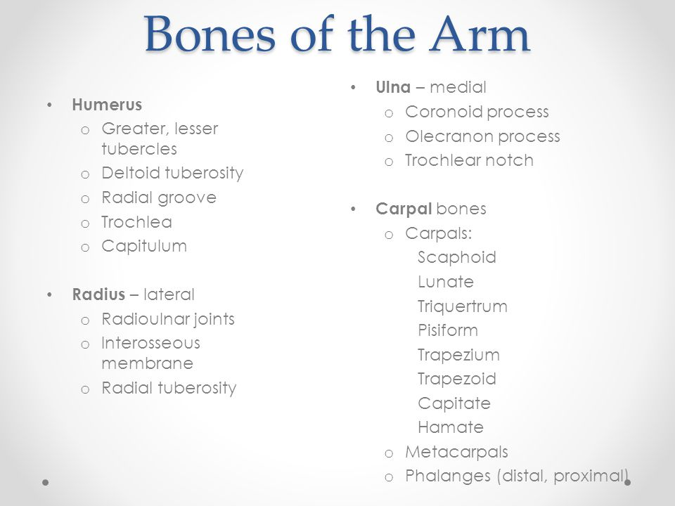 Bones of the Arm Ulna – medial Coronoid process Humerus