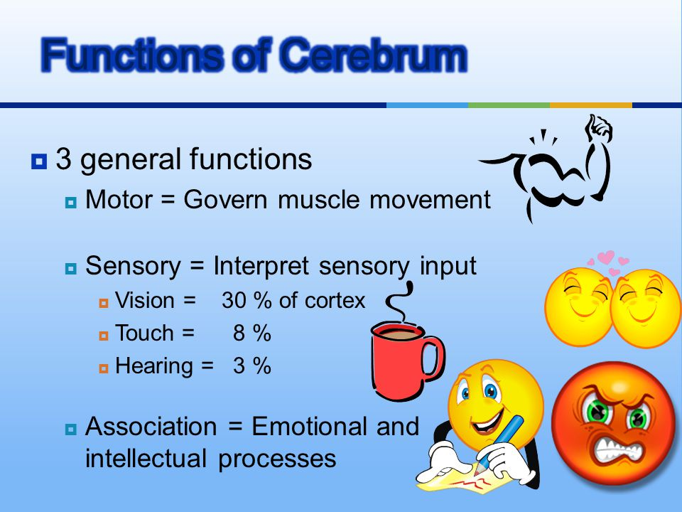 Functions of Cerebrum 3 general functions
