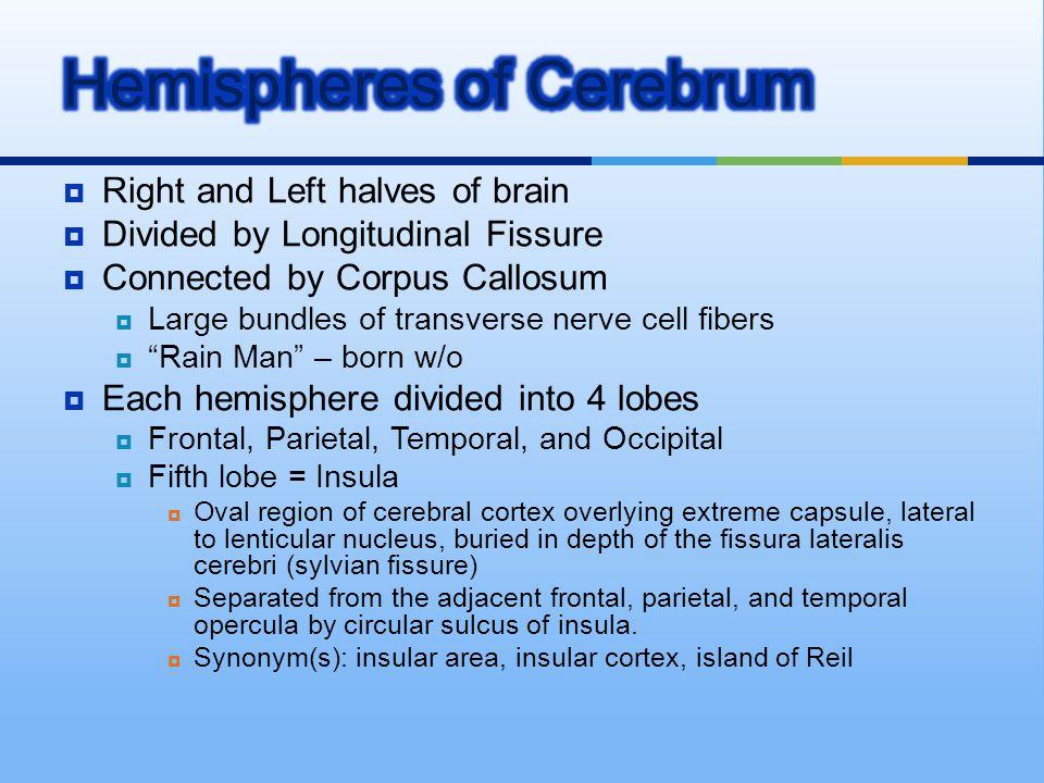 Hemispheres of Cerebrum