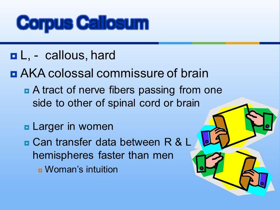 Corpus Callosum L, - callous, hard AKA colossal commissure of brain