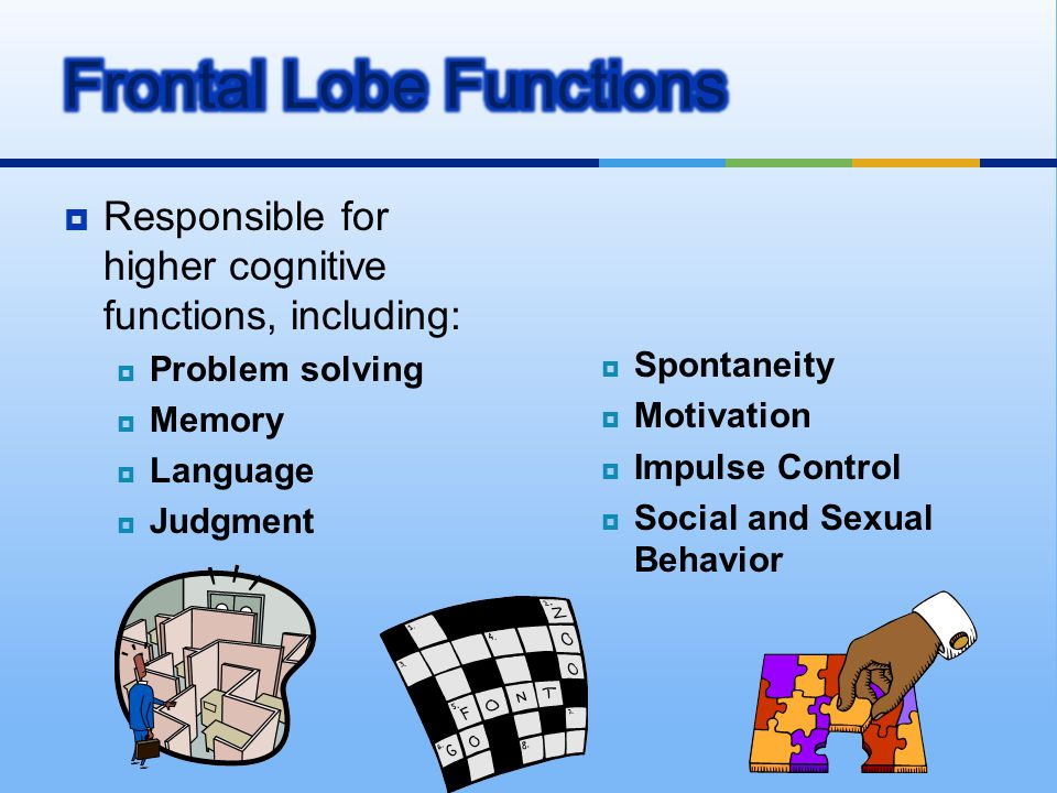 Frontal Lobe Functions