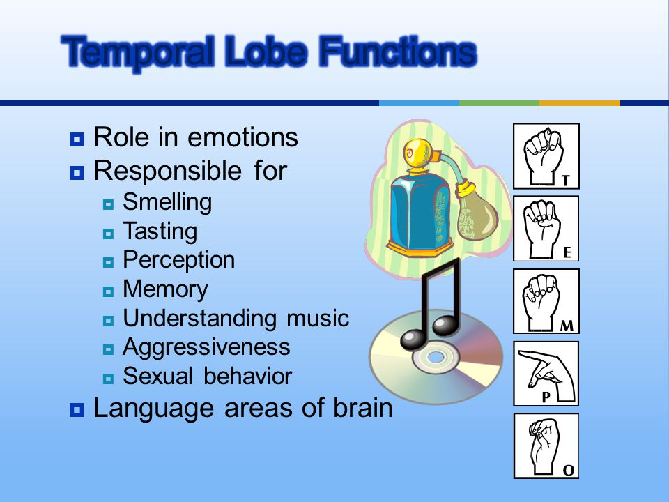 Temporal Lobe Functions