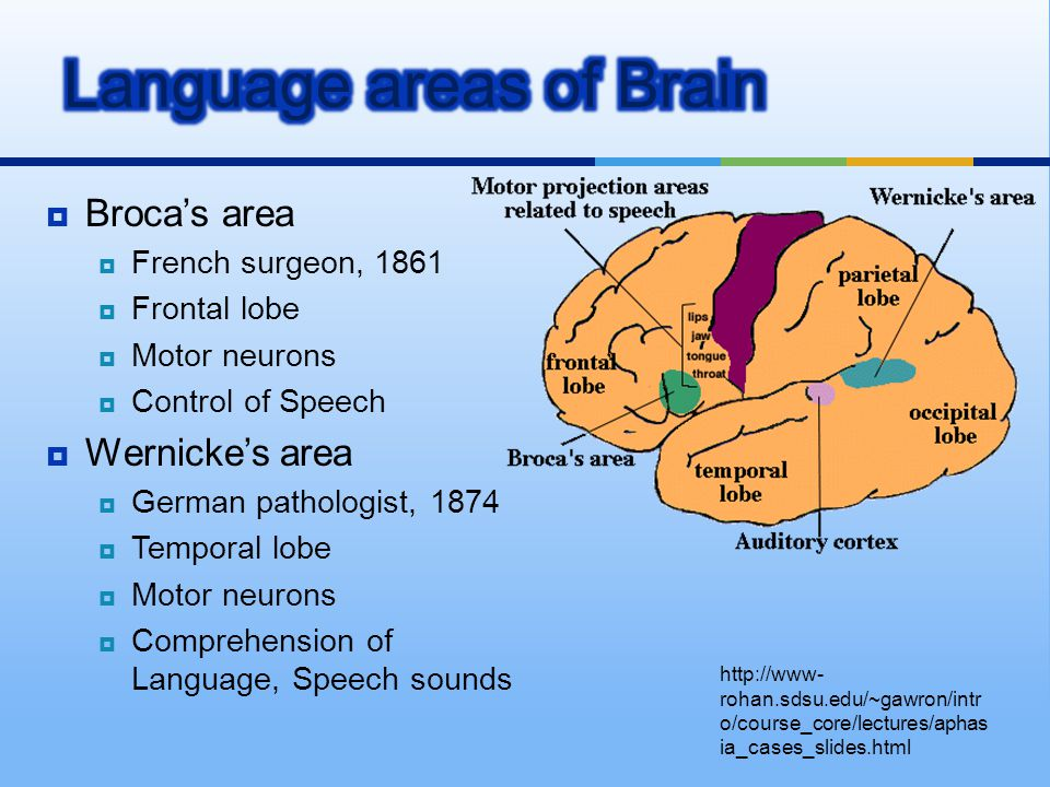 Language areas of Brain