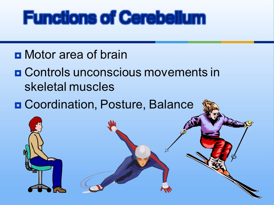 Functions of Cerebellum