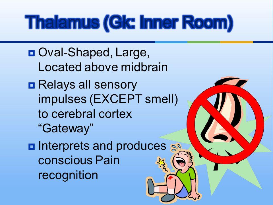 Thalamus (Gk: Inner Room)