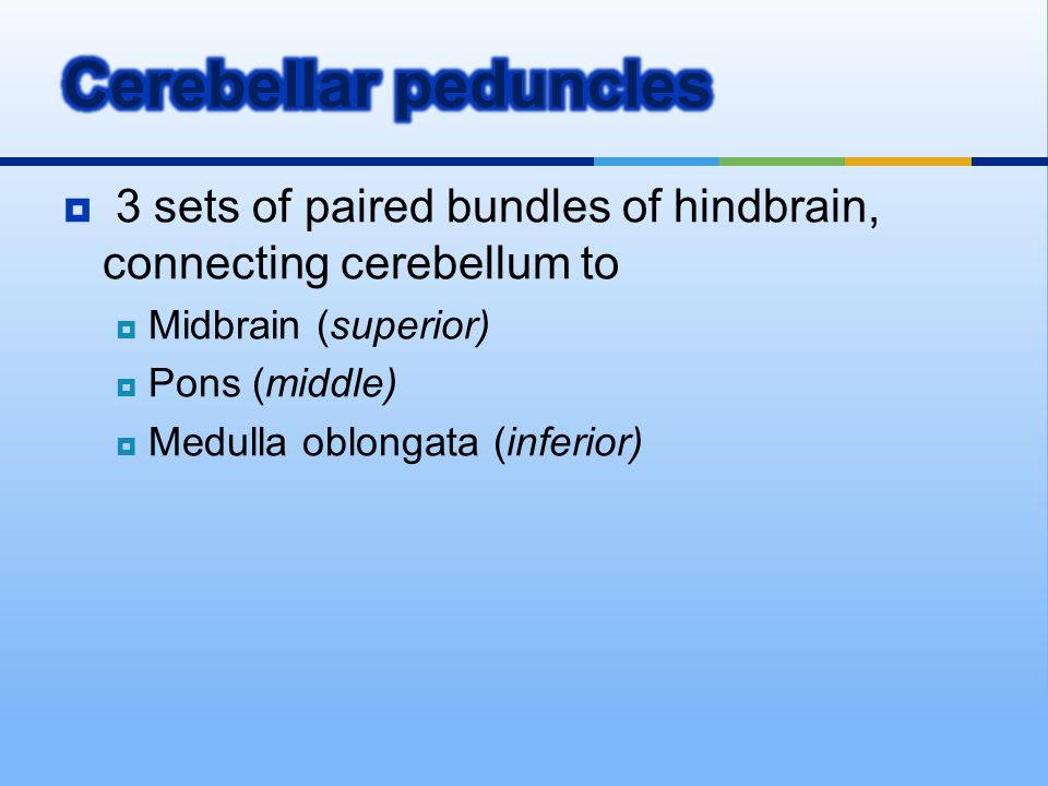 Cerebellar peduncles 3 sets of paired bundles of hindbrain, connecting cerebellum to. Midbrain (superior)
