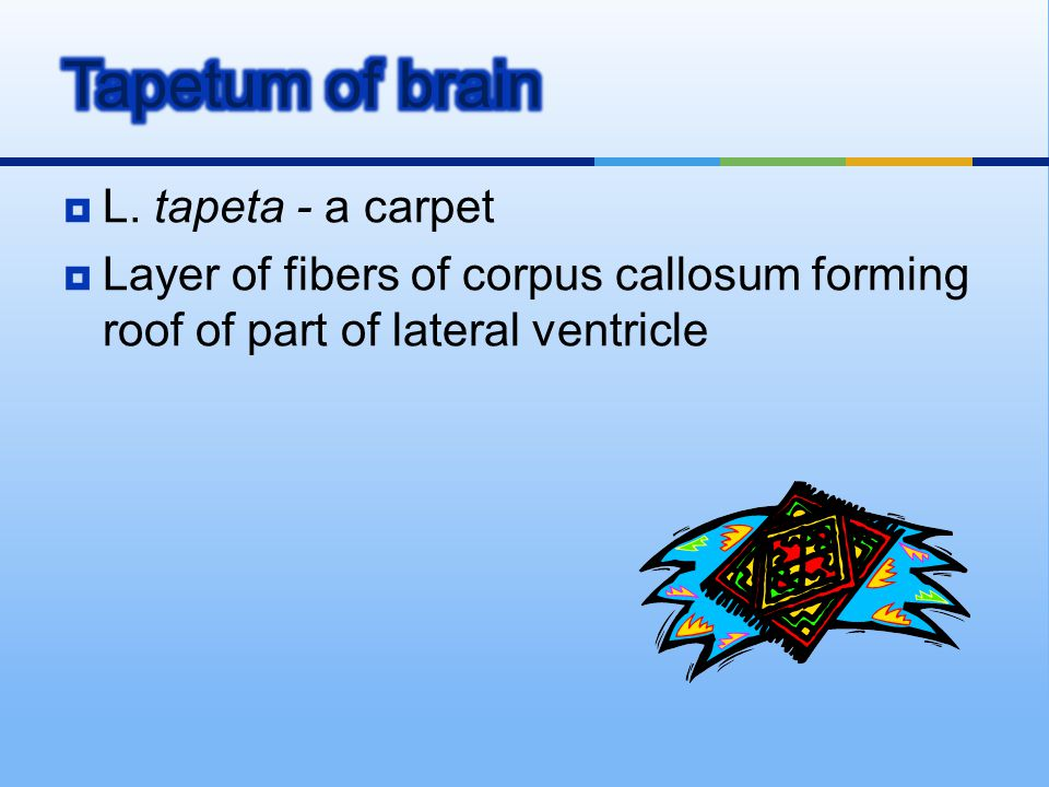 Tapetum of brain L. tapeta - a carpet