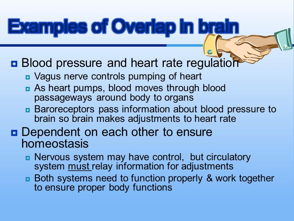 Examples of Overlap in brain
