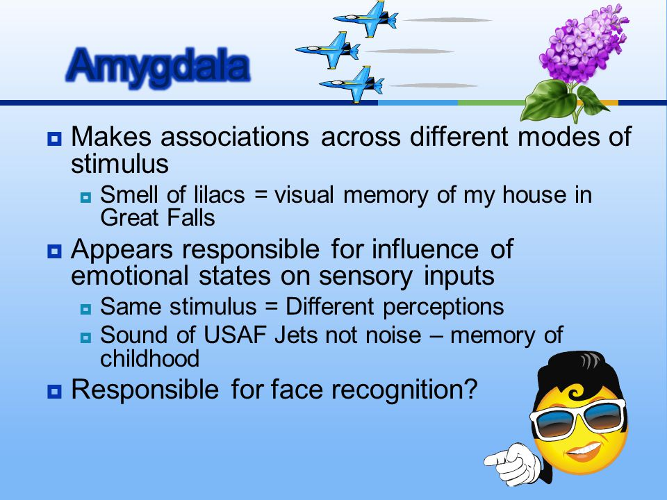 Amygdala Makes associations across different modes of stimulus