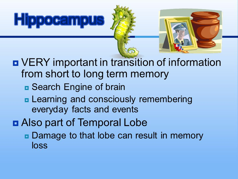 Hippocampus VERY important in transition of information from short to long term memory. Search Engine of brain.