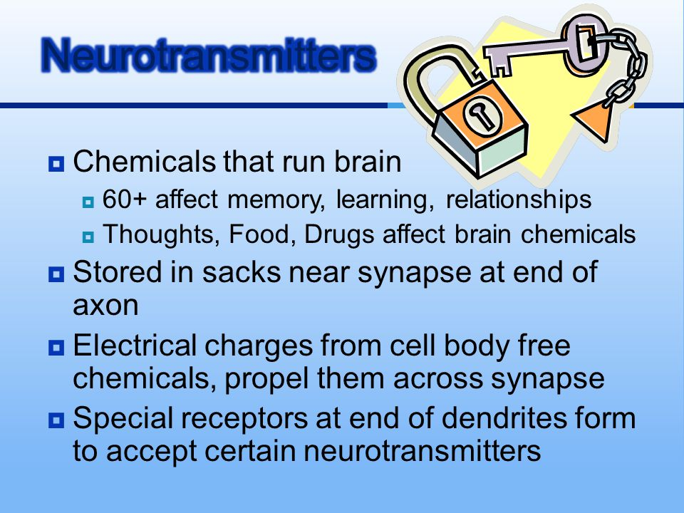Neurotransmitters Chemicals that run brain