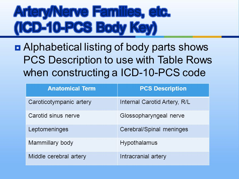 Artery/Nerve Families, etc. (ICD-10-PCS Body Key)