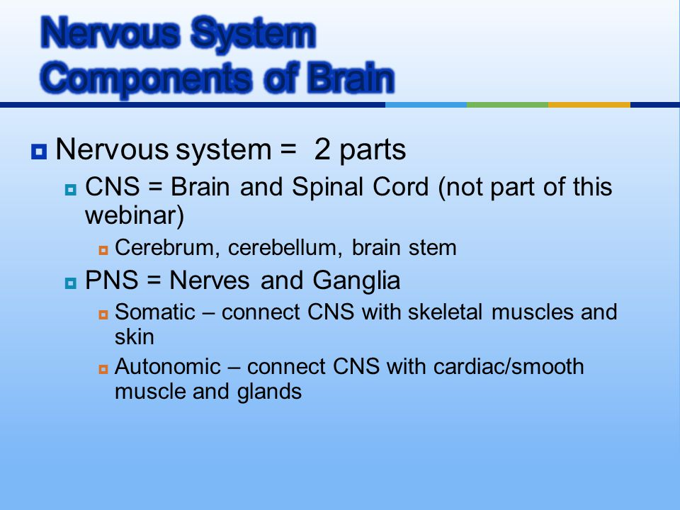 Nervous System Components of Brain