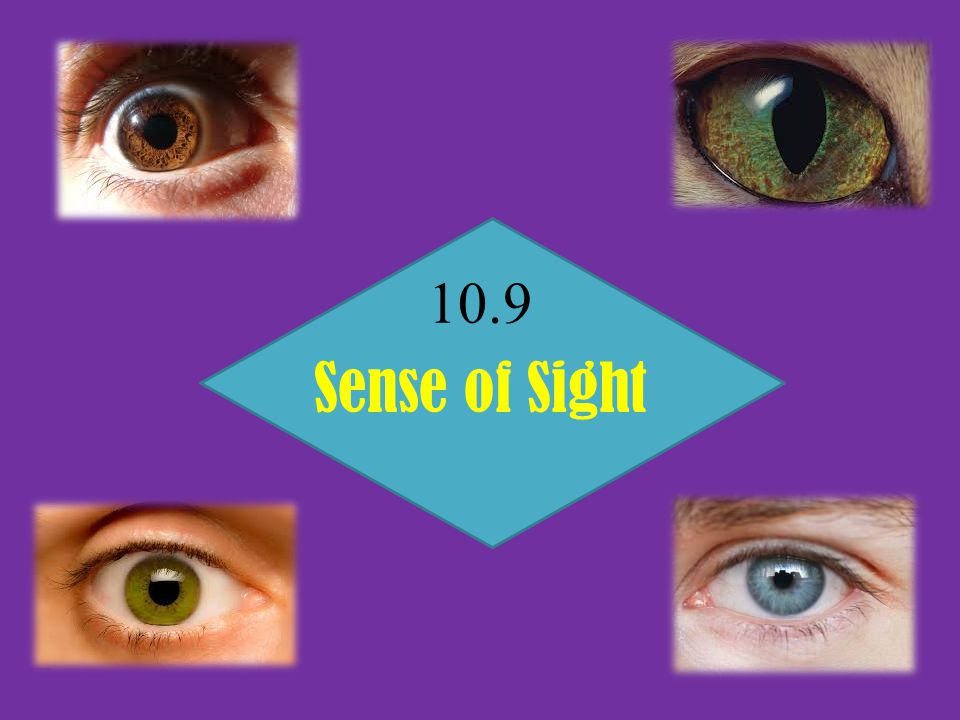 10.9 Sense of Sight