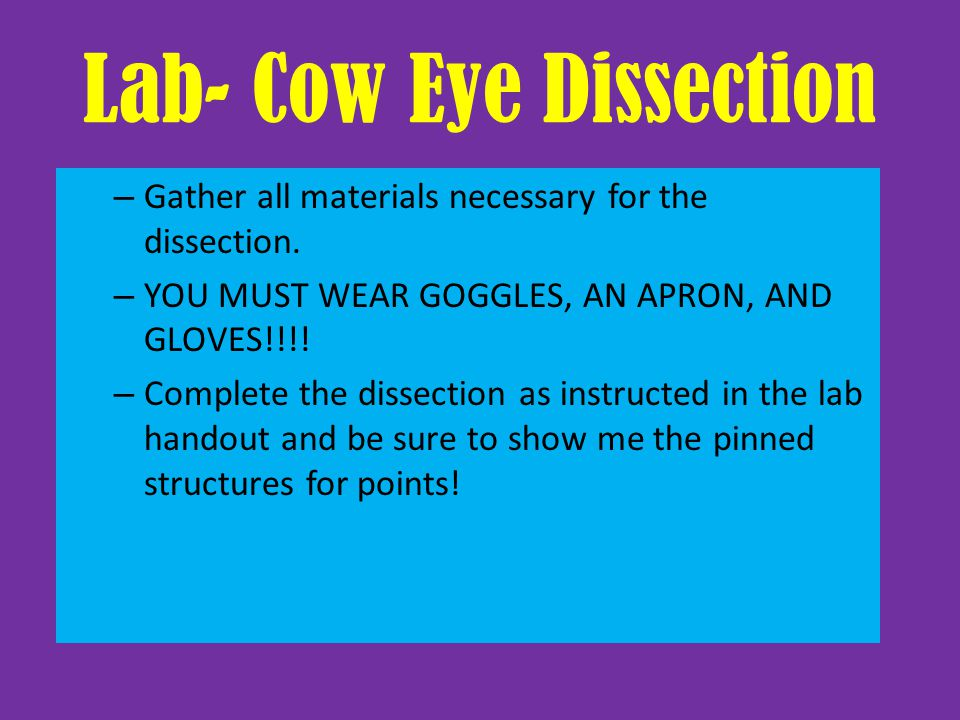 Lab- Cow Eye Dissection