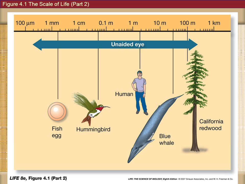 Figure 4.1 The Scale of Life (Part 2)