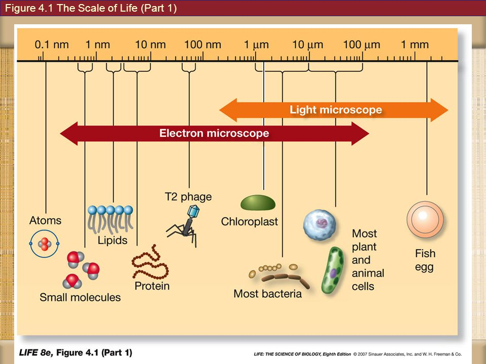 Figure 4.1 The Scale of Life (Part 1)