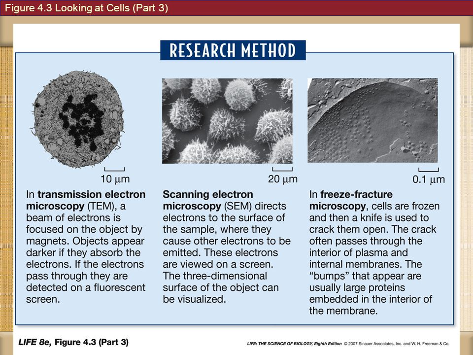 Figure 4.3 Looking at Cells (Part 3)