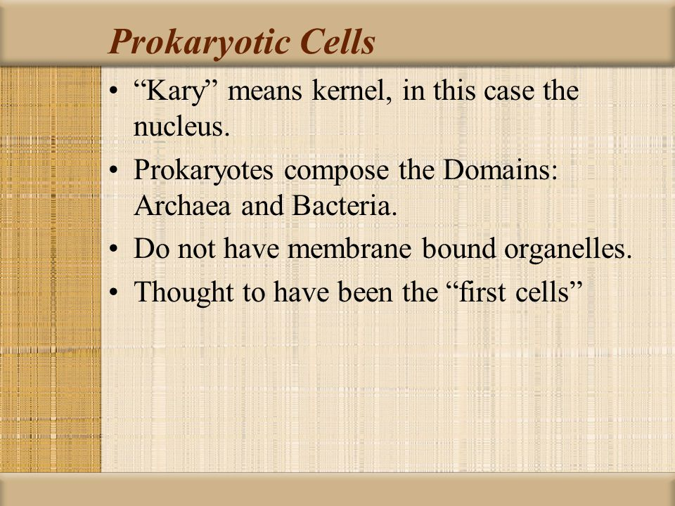 Prokaryotic Cells Kary means kernel, in this case the nucleus.