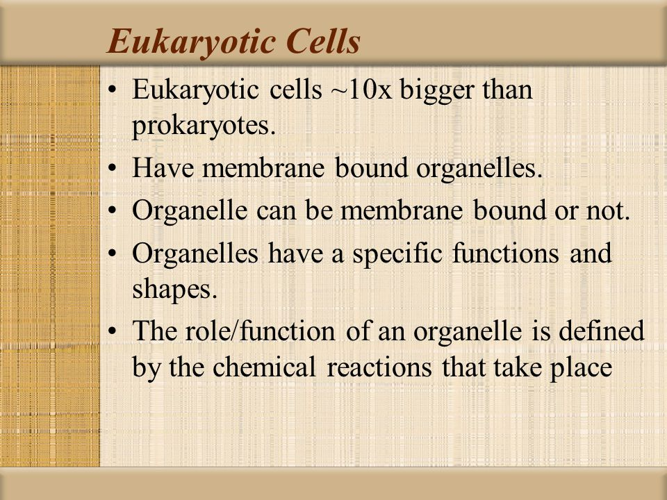Eukaryotic Cells Eukaryotic cells ~10x bigger than prokaryotes.