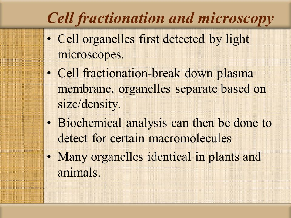 Cell fractionation and microscopy
