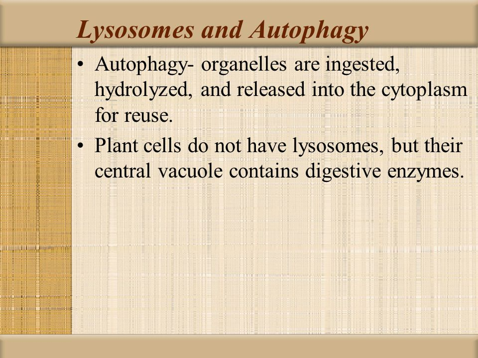 Lysosomes and Autophagy