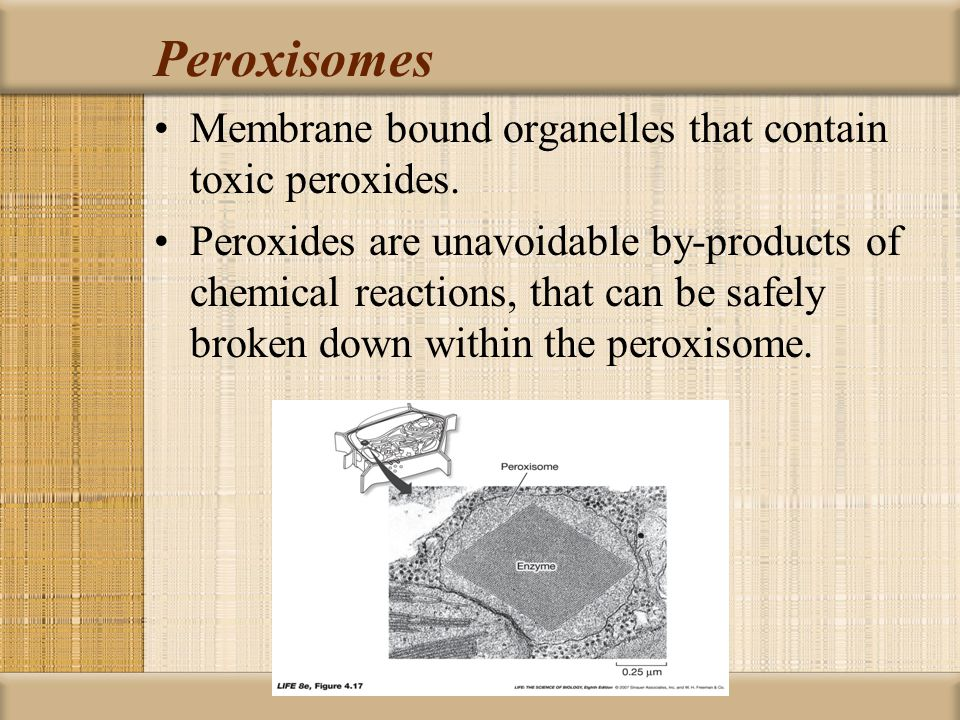 Peroxisomes Membrane bound organelles that contain toxic peroxides.