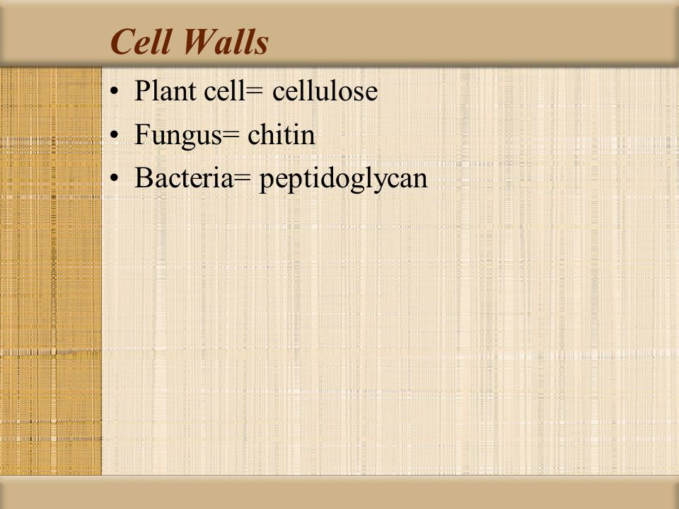 Cell Walls Plant cell= cellulose Fungus= chitin