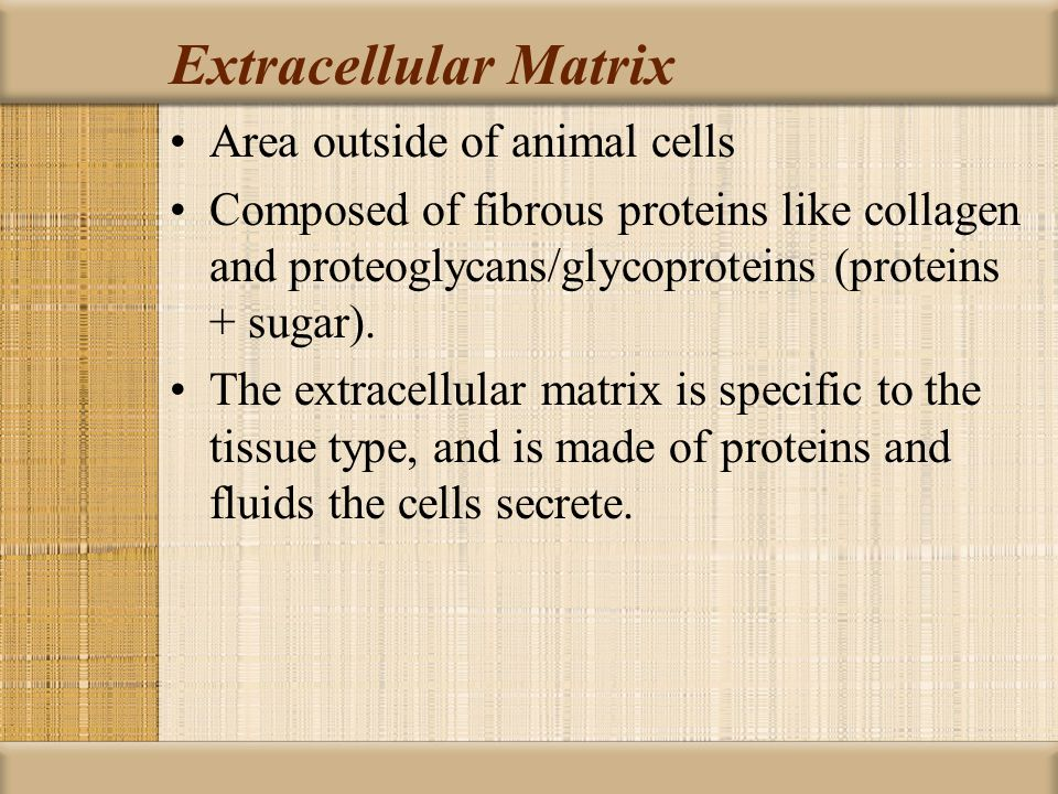 Extracellular Matrix Area outside of animal cells