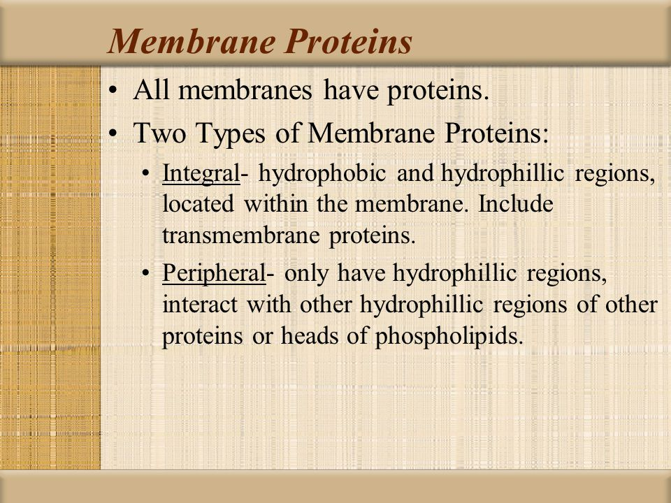 Membrane Proteins All membranes have proteins.