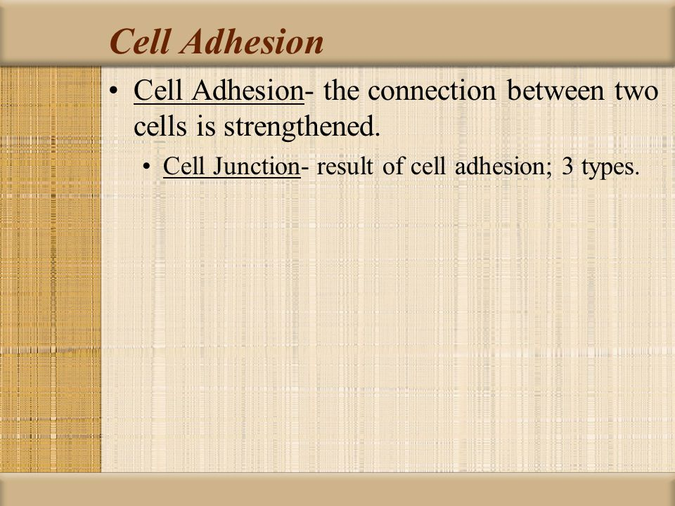 Cell Adhesion Cell Adhesion- the connection between two cells is strengthened.