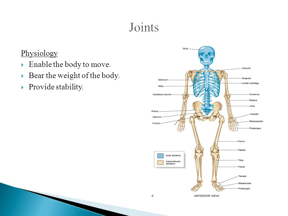 Joints Physiology Enable the body to move.
