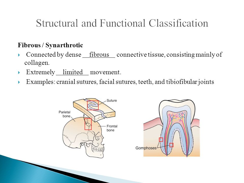 Structural and Functional Classification