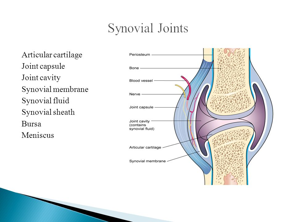 Synovial Joints Articular cartilage Joint capsule Joint cavity Synovial membrane Synovial fluid Synovial sheath Bursa Meniscus