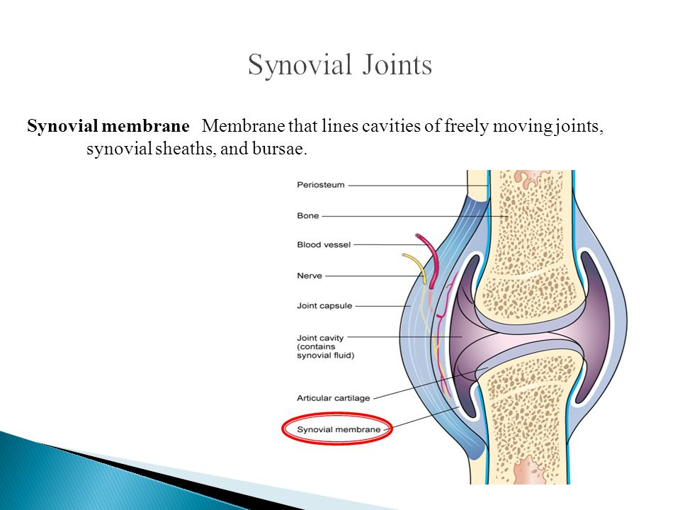 Synovial Joints Synovial membrane Membrane that lines cavities of freely moving joints, synovial sheaths, and bursae.