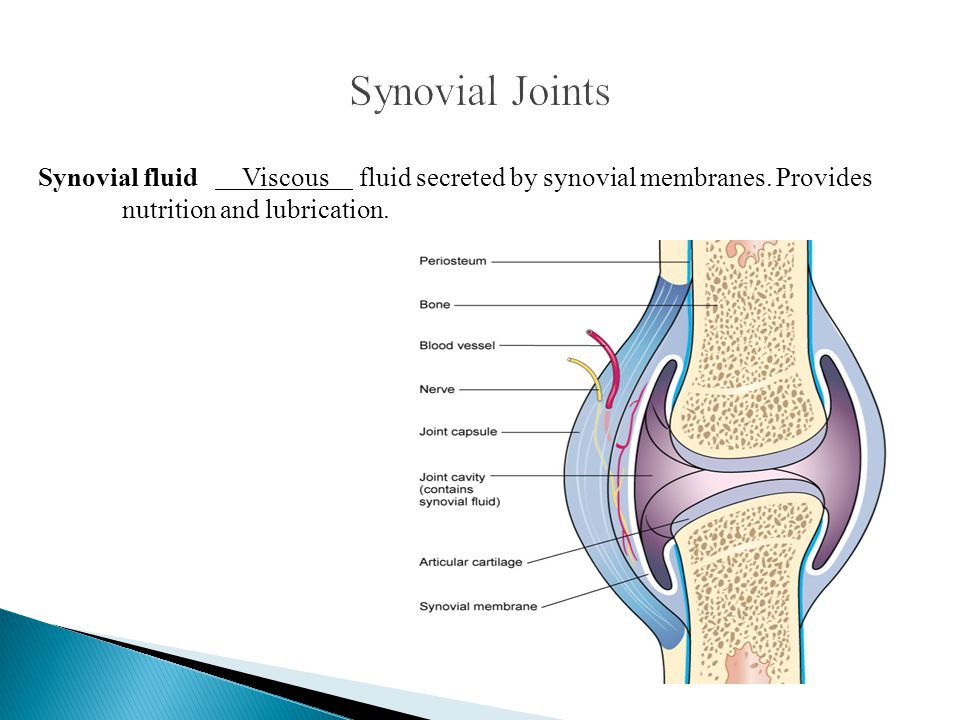 Synovial Joints Synovial fluid Viscous fluid secreted by synovial membranes.