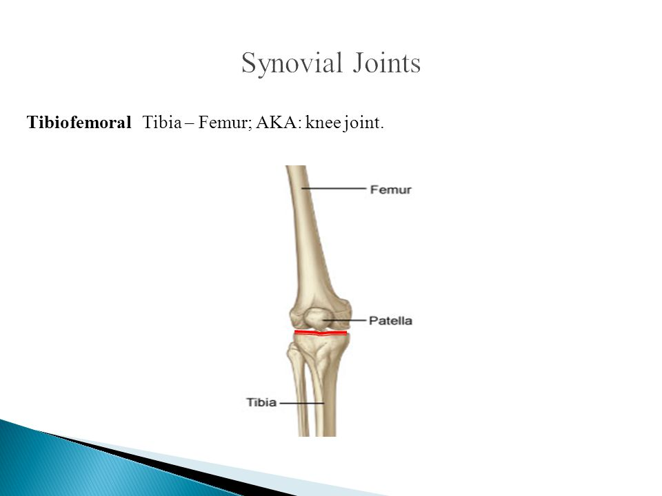 Synovial Joints Tibiofemoral Tibia – Femur; AKA: knee joint.