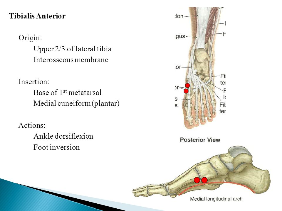 tibialis anterior paresthesis