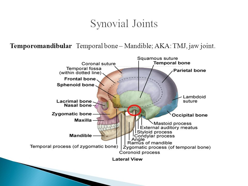 Synovial Joints Temporomandibular Temporal bone – Mandible; AKA: TMJ, jaw joint.